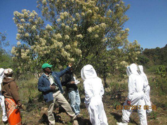 Beekeeping training facilitation