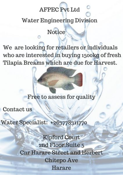 Tilapia Breams for sale
