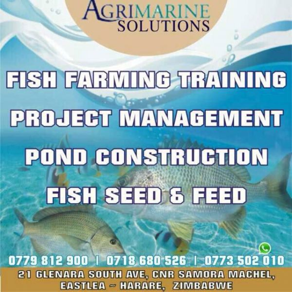 Agrimarine solutions agri universe zimbabwe for Pond construction for fish farming