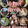 Road Runner Day old chicks. Pure Breeds: Australop, Koekok, Rhode Island, Potch koekoek, Sussex and Mixed Breeds