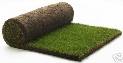 Beautiful Green Neat Rolled Instant Evergreen Carpet Lawns